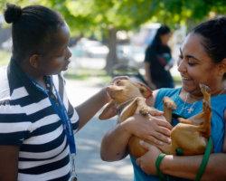 Barking in Bushwick: Wendy M. Siegel Center's Dog-Walking Partnership